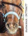 pony portrait | Shutterstock . vector #247706677