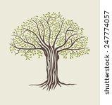 tree vector illustration.... | Shutterstock .eps vector #247774057