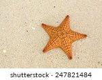 starfish on the beach | Shutterstock . vector #247821484