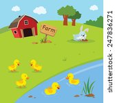 Farm. Ducklings And Farmhouse...