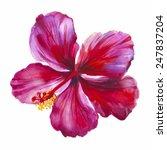 watercolor red hibiscus. hand... | Shutterstock .eps vector #247837204