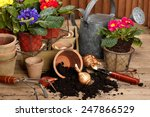 gardening tools and beautiful... | Shutterstock . vector #247866529
