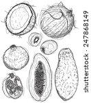 fruit drawings | Shutterstock .eps vector #247868149