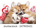 Stock photo two puppies sleep in each other s arms 247905421