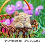 Stock photo cute little kitten sleeping in a basket on the floral lawn 247906261