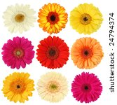Daisy Flower Collection...