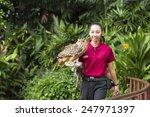 jurong bird park  singapore  ... | Shutterstock . vector #247971397