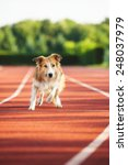 Dog Running At Sport Stadium I...