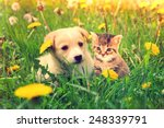 Kitten And Puppy Outdoors