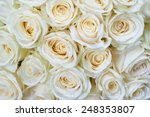 Stock photo many white roses as a floral background 248353807
