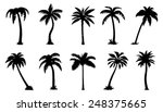 palm silhouttes on the white background