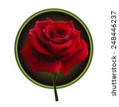 picture of red rose in a round... | Shutterstock .eps vector #248446237