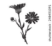 Hand Drawn Flowers   Calendula...