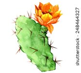 Opuntia Cactus With Yellow...