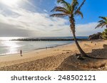 Palm Tree On Flamingo Beach In...