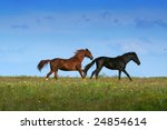 two horses on the meadow / landscape - stock photo