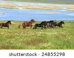 horses on the meadow / landscape - stock photo