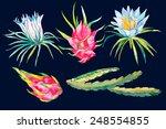pitaya.tropical leaves  flower... | Shutterstock .eps vector #248554855