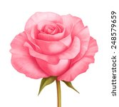 Vector Rose Pink Flower...