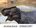 Elephants Take A Bath In Kwae...