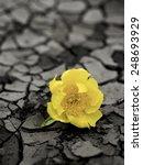yellow flower on cracked mud... | Shutterstock . vector #248693929
