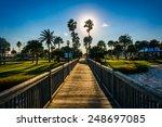 The Sun Shining Through Palm...