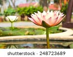 waterlily or lotus flower in... | Shutterstock . vector #248723689