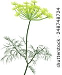 illustration with green dill... | Shutterstock .eps vector #248748724