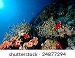 coral and fish | Shutterstock . vector #24877294