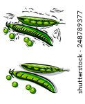 fresh peas and beans in woodcut ... | Shutterstock .eps vector #248789377