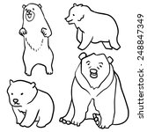 vector set of bear   Shutterstock .eps vector #248847349