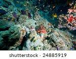 smallscale scorpionfish ... | Shutterstock . vector #24885919