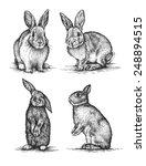 Stock photo engraving black and white rabbit isolated on white background 248894515