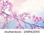Spring Sakura Pink Flower With...
