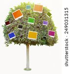 green tree with color photo... | Shutterstock . vector #249031315