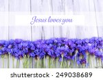 Beautiful Cornflowers And Text...