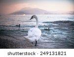 swan near sirmione  garda lake  ...   Shutterstock . vector #249131821