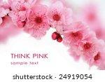 cherry tree blossoms on white... | Shutterstock . vector #24919054