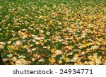 Colorful Fallen Leaves On The...