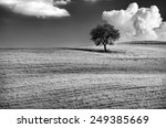 Black And White Photo Of A...