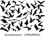 Stock vector illustration with gull silhouette collection on white 249698341