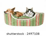 Stock photo dog and cat in bed 2497108
