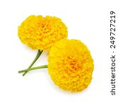 Yellow Marigold Wiht Isolated...