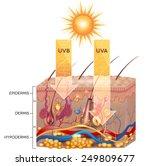 uvb and uva radiation penetrate ... | Shutterstock .eps vector #249809677