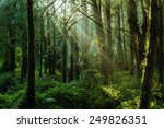 sun beams in the forest in ali... | Shutterstock . vector #249826351