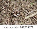 Pine Cones On Ground Close Up...