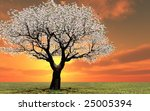 beautiful tree in the sunset | Shutterstock . vector #25005394
