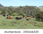 Marin County Cattle Ranch In...
