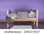 Stock photo cat sleeping in her bed 250171927