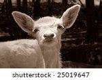 white deer | Shutterstock . vector #25019647
